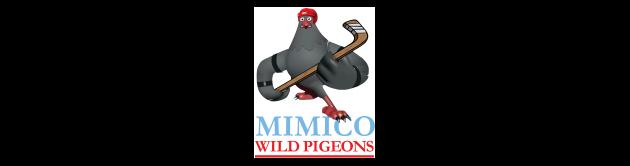 Mimico Wild Pigeons
